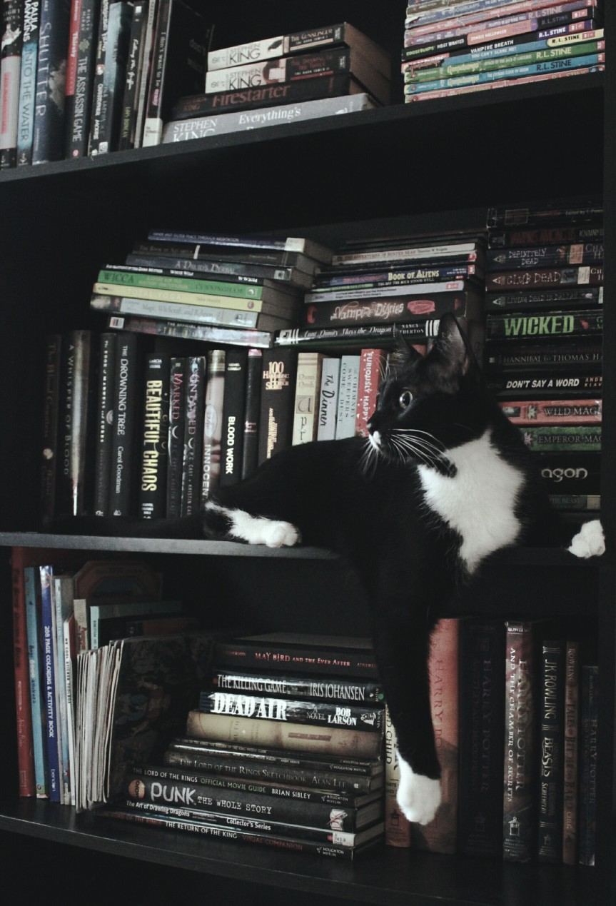 Cats of thePage!